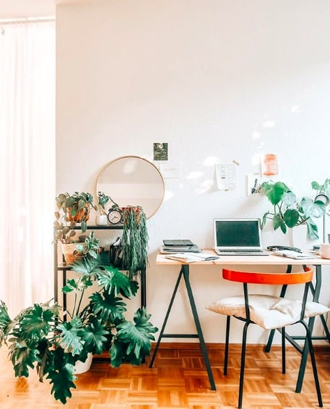 plant home office hack
